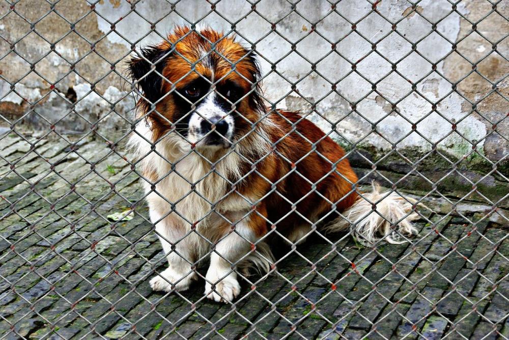 animal-welfare-1116206_1280